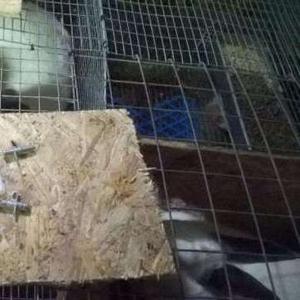 Поилки ниппельные для кроликов шиншилл и нутрии. Поилка. Ниппеля