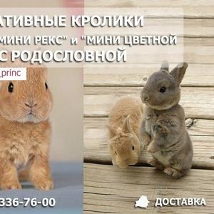 Декоративные кролики с родословной