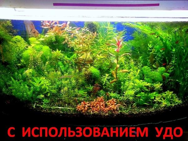 Жизненно важные элементы для растений - микро. макро,  калий,  железо. 6