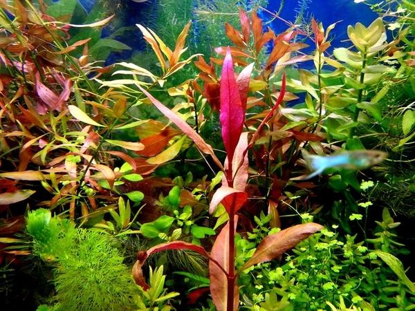 Удобрения(микро,  макро,  калий,  железо) для аквариумных растений.... 3