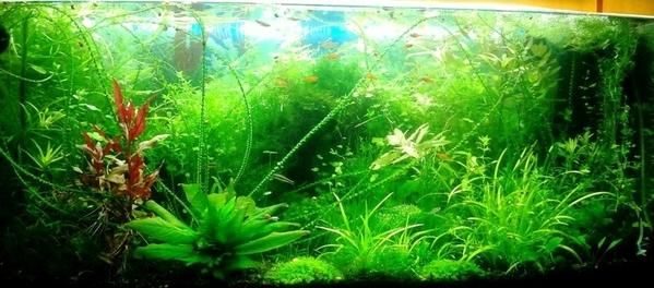 Удобрения(микро,  макро,  калий,  железо) для аквариумных растений.... 5