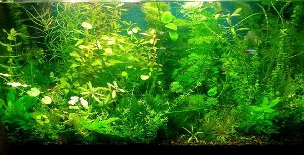 Удобрения(микро,  макро,  калий,  железо) для аквариумных растений.... 7