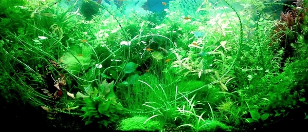 Удобрения(микро,  макро,  калий,  железо) для аквариумных растений.... 8