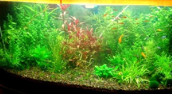 Удобрения(микро,  макро,  калий,  железо) для аквариумных растений.... 9