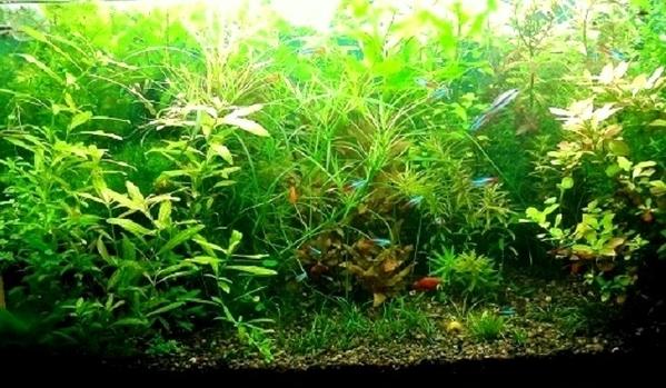 Удобрения(микро,  макро,  калий,  железо) для аквариумных растений.... 10
