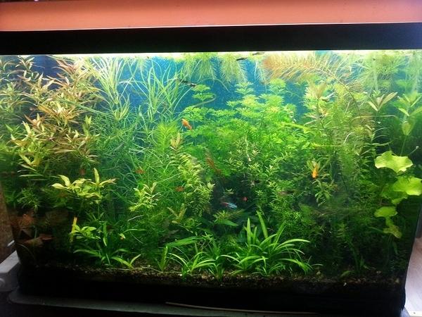 Удобрения(УДО микро,  макро,  калий,  железо) ---для аквариумных растений 2