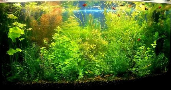 Удобрения(УДО микро,  макро,  калий,  железо) ---для аквариумных растений 3
