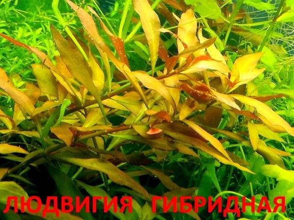 Соберу набор из неприхотливых аквариумных растений для запуска акваса 8