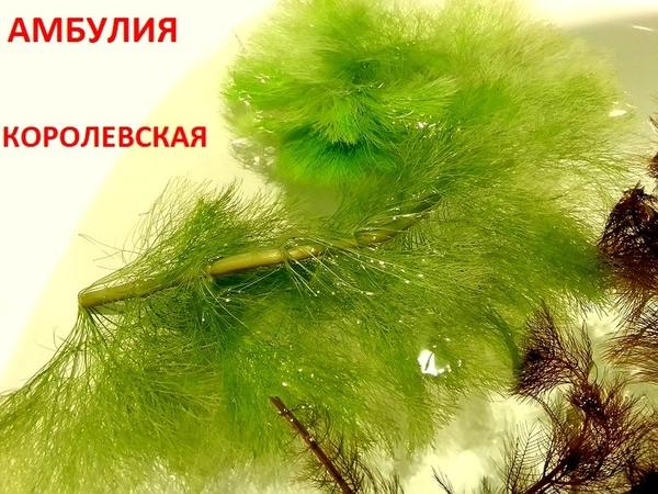 Соберу набор из неприхотливых аквариумных растений для запуска акваса 11