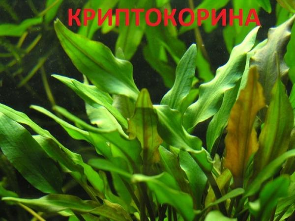 Аквариумные растения наборы неприхотливых растений для запуска 5
