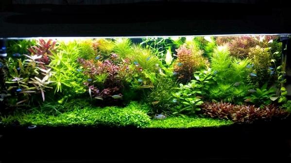 Удобрения(микро,  макро,  калий,  железо) для аква растений. ПОЧТОЙ отпр
