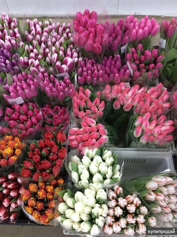 Тюльпаны выгодно оптом в Минске 3