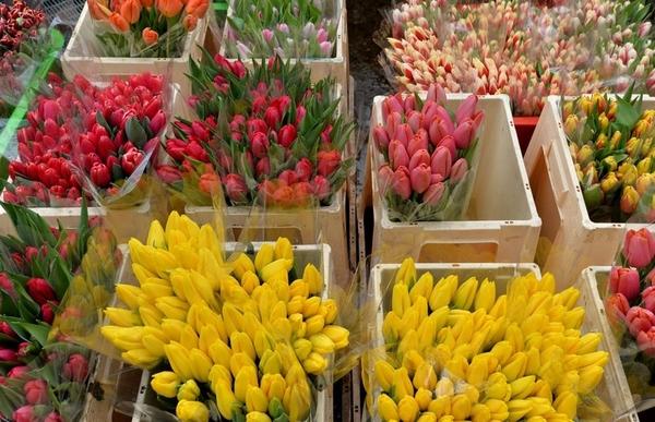 Цветы.Тюльпаны. Оптом. 2