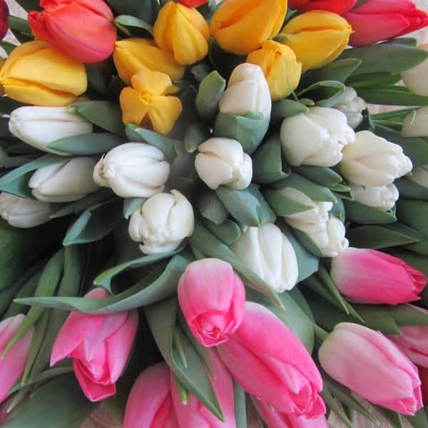 Свежие тюльпаны недорого оптом 2