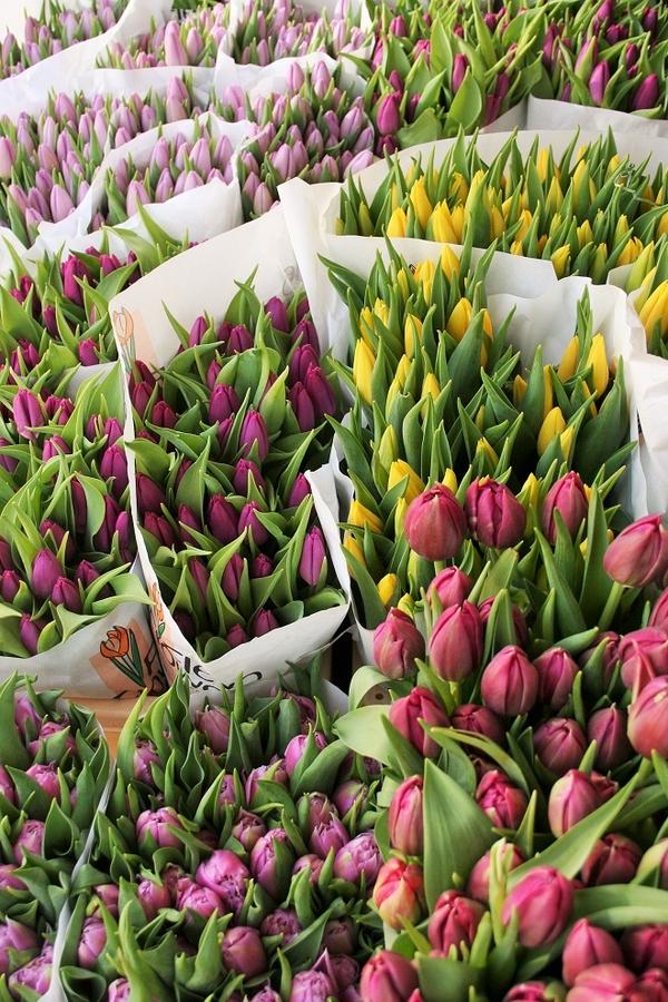Оптом тюльпаны в ассортименте