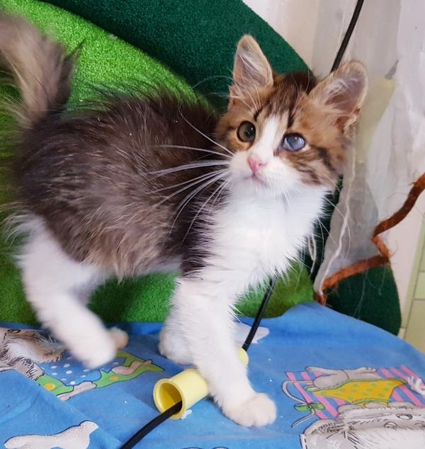 Домашние ручные котята в дар. 5