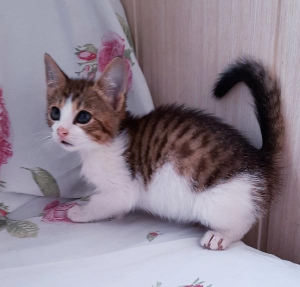 Домашние ручные котята в дар. 2