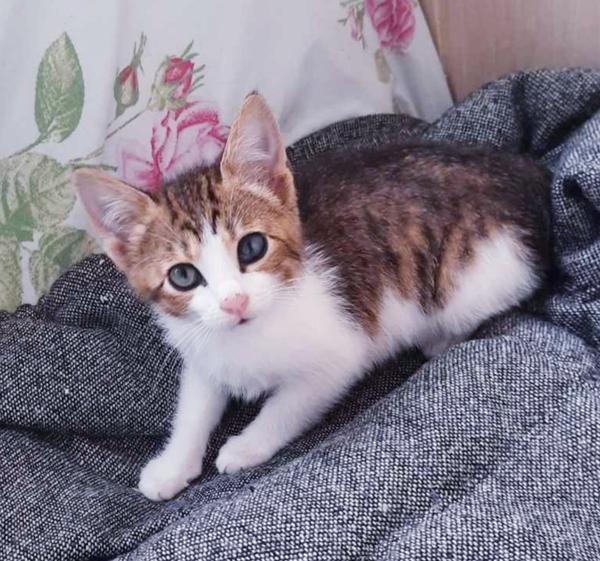 Домашние ручные котята в дар.