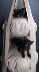 Мебель для животных. Комплекс