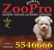 Зоотовары для кошек и собак (магазин ZooPro)
