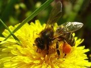 пчелиные семьи с ульями