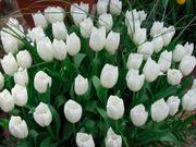 Цветы оптом недорого от производителя 12 разнообразных цветов