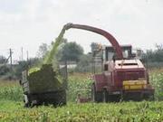 Силос кукурузный продам