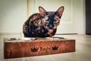 АКЦИЯ : Скидка 30 % на персонализированную мисочку для еды для котика или собачки.