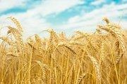 Зерно фуражное закупаем оптом