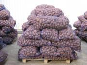 Картофель оптом от производителя в Беларуси