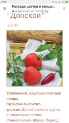 Рассада томатов. Саженцы