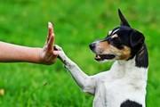Дрессировка собак. Индивидуальные и групповые занятия