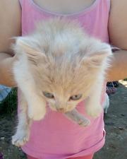 Котята в дар!!!!!!!!!!!!!!